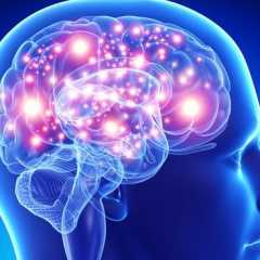 Tres cerebros en uno